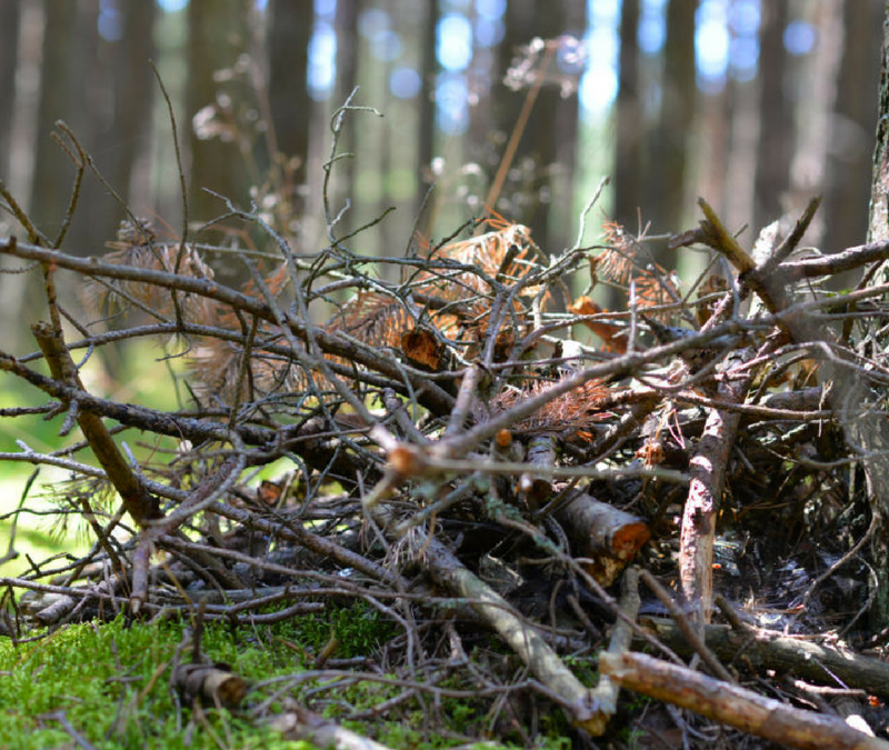 Brush clearing services from Colonel Landscaping