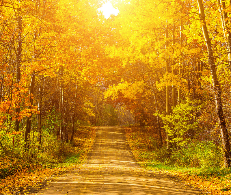 Drive down a fall road to see the fall colors