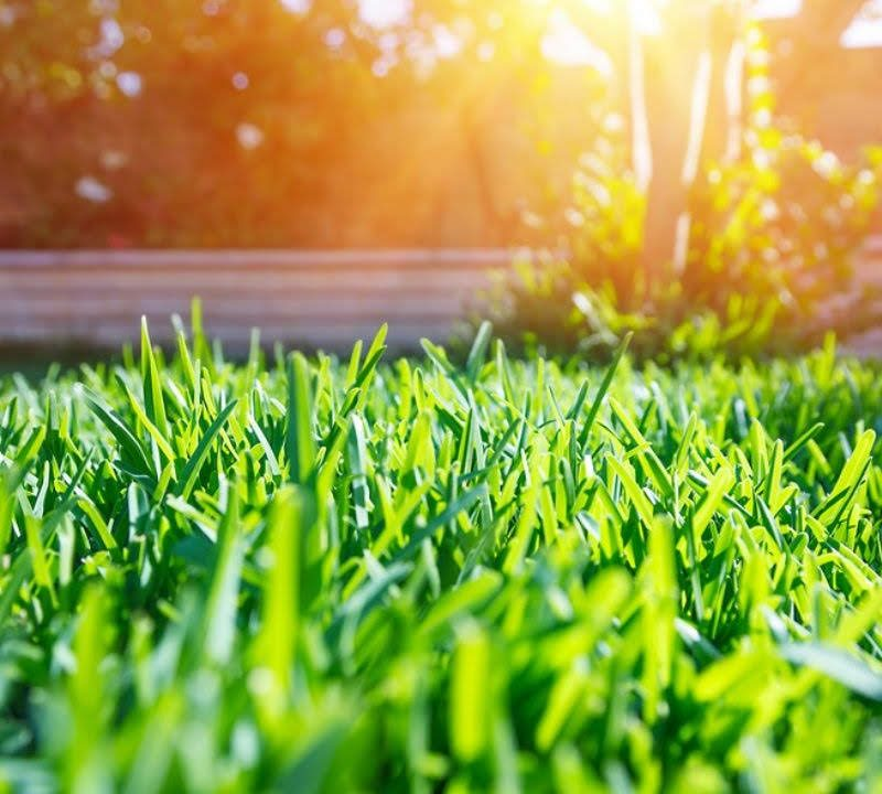 These summer lawn care tips will get your Essex, CT lawn looking beautiful all year long.