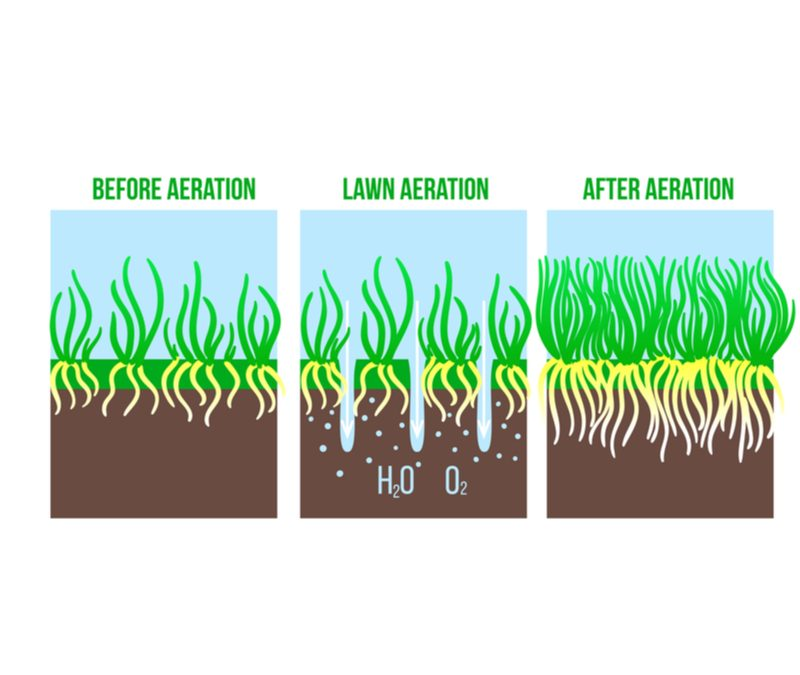 Use aeration and over seeding to help your lawn stay healthy.