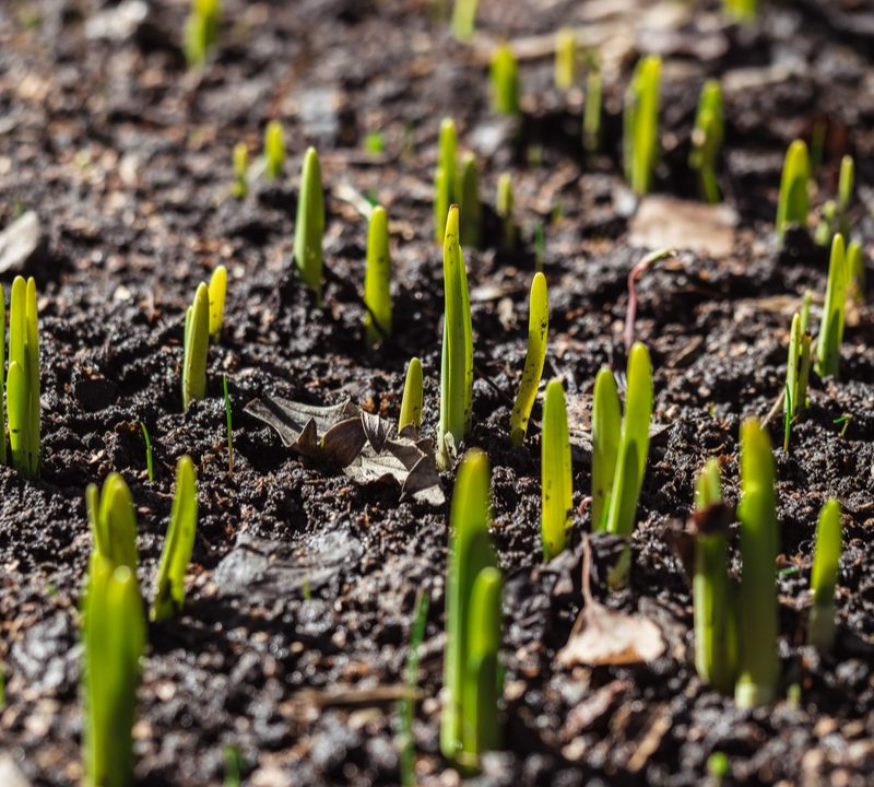 Establishing a new lawn here in Groton, CT can be difficult, check out our guide to growing grass.