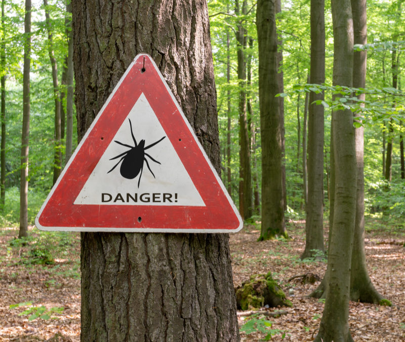 Fall tick control will help you keep ticks from making a home in your Essex, CT lawn.
