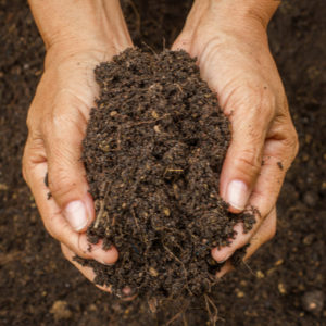 With the gift of a healthy lawn here in Essex, CT, you'll be giving the gift of healthy soil as well.